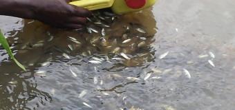 Gulu Farmers Get Operation Wealth Creation Fish