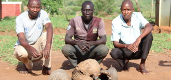 Police Officer, Nurse Arrested For Poaching Pangolin