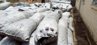 Gulu District Collects 600 Million From Charcoal Dealers