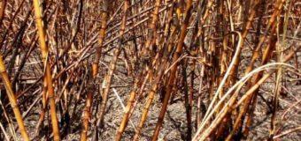 Attiak Sugar Factory Suffers Yet Another Fire