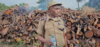 South Sudan Authorities Release Six Ugandans Arrested for Illegal Logging