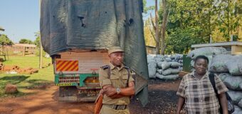 Police Impounds Over 5,000 Bags of Charcoal in Amuru