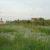NEMA Blocks Multi-Million NUSAF Project on Gulu Wetland